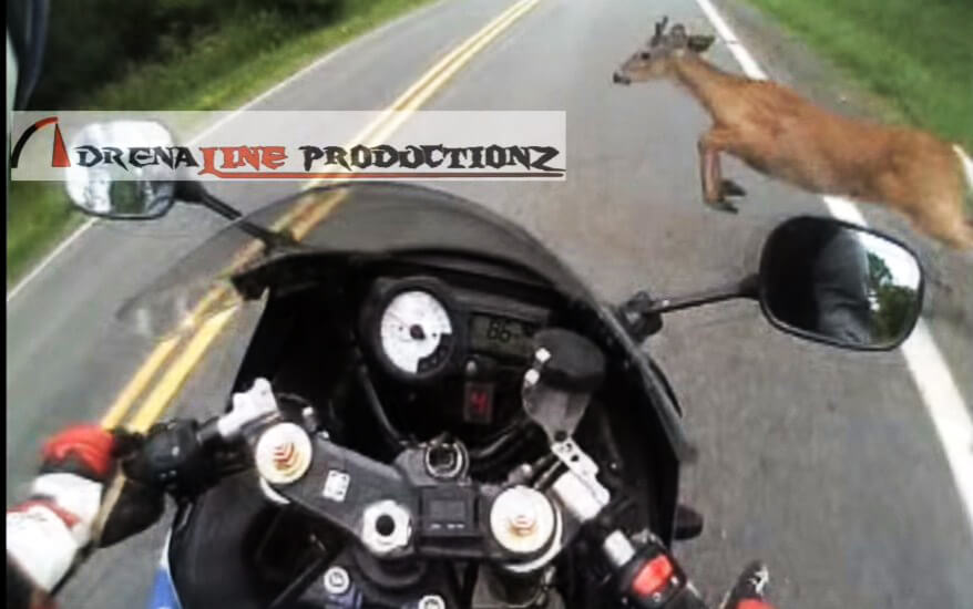 Motorcycle-rider-vs-deer-2
