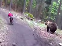 Rider Charged by Bear at Bike Park!