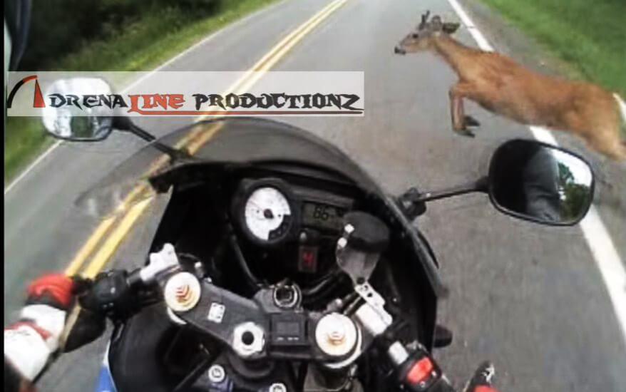 Motorcycle-rider-vs-deer-2